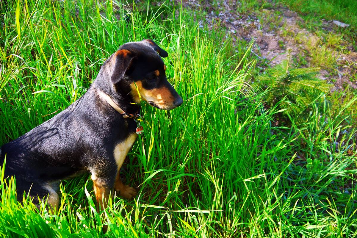 Hofhund auf dem Halterhof