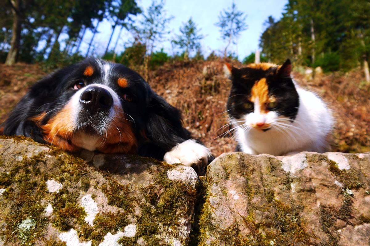 Bauernhof mit Hund und Katze