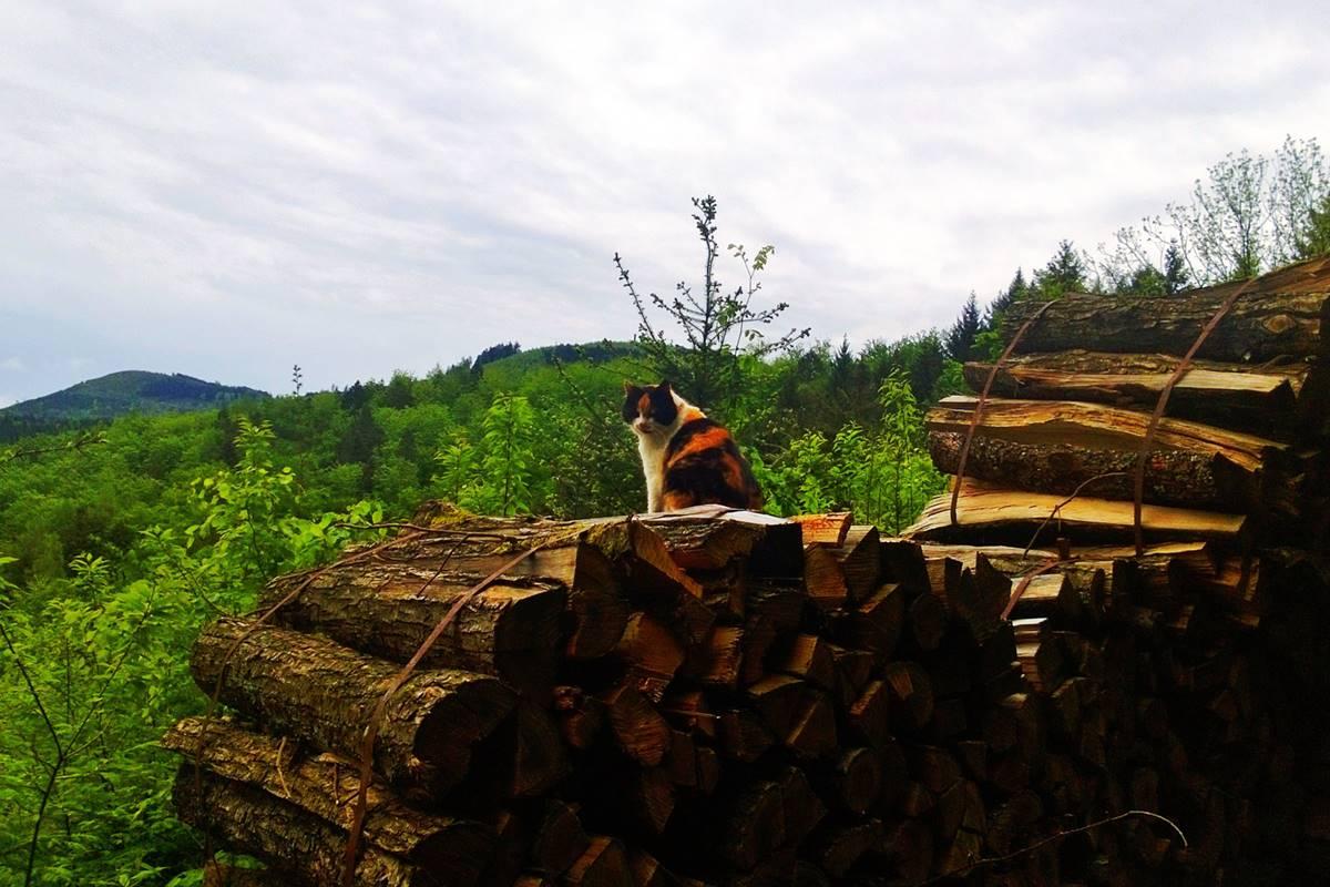 Katze auf Holzstapel