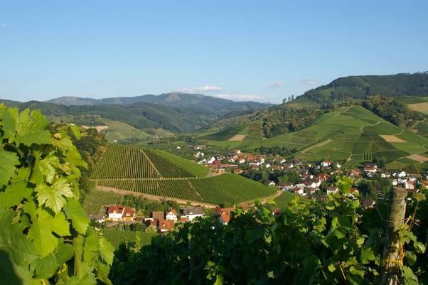 Blick auf die Weinberge rund um Durbach