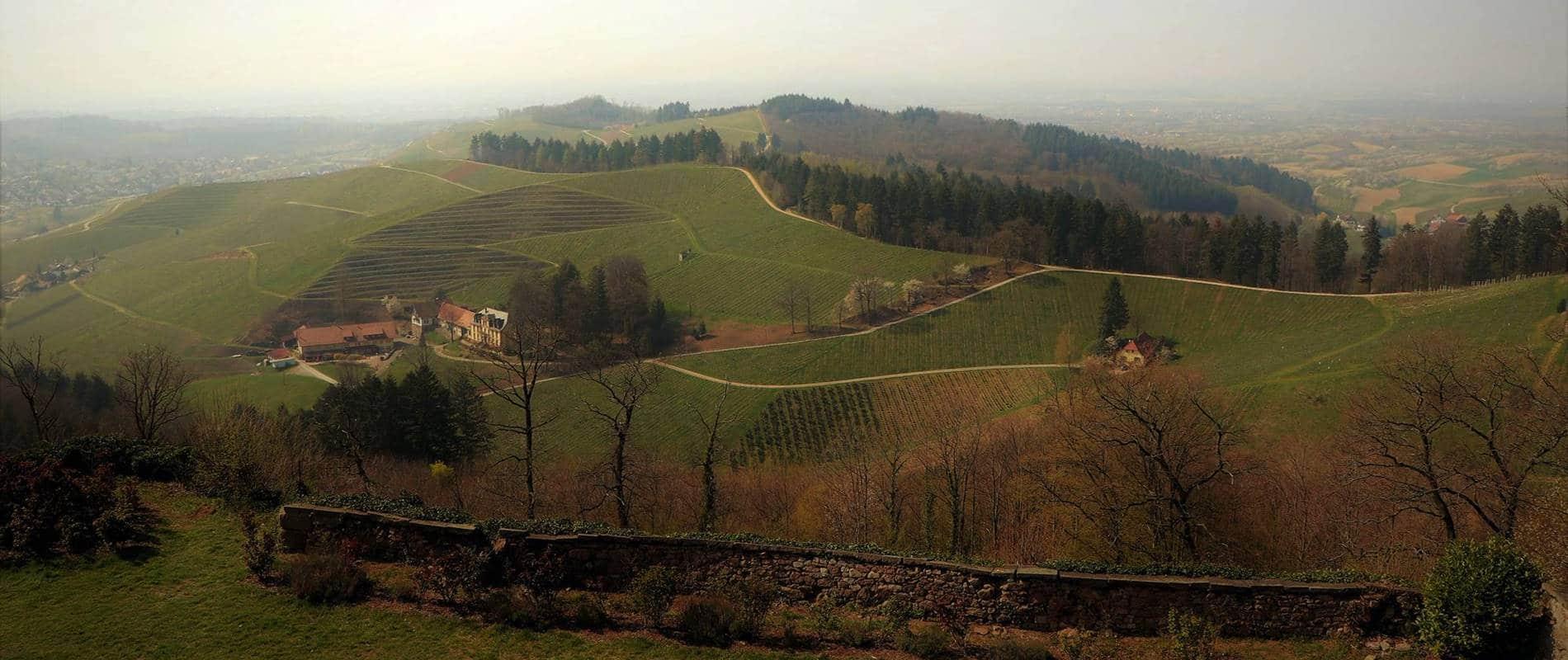 Aussicht vom Schloss Staufenberg über die Weinberge bis ins Rheintal