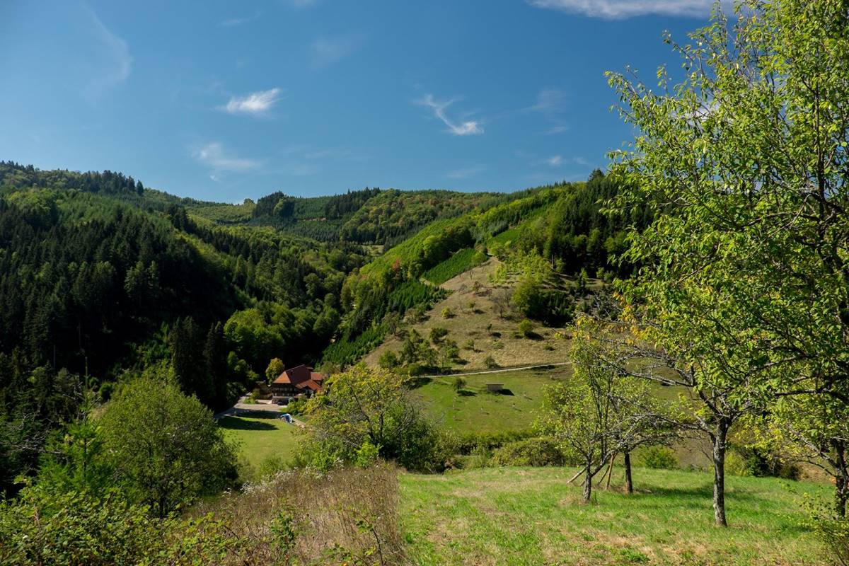 Ausblick am Gebirger-Höfe-Weg