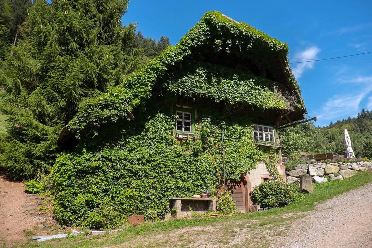 Mit Efeu bewachsenes altes Tagelöhnerhaus am Premiumwanderweg Gebirger Höfe Weg in Durbach