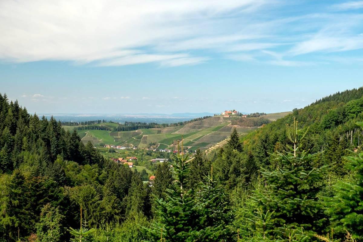Ausblick auf Schloss Staufenberg vom premiumwanderweg Gebirger Höfe Weg